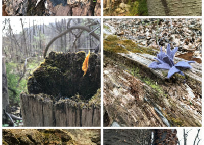 """Elena Rosenberg, Felt Bombing (small hand-felted wool sculptures """"planted"""" in woodland setting), Fiber art sculpture documented via digital photography collage print (open edition), 8""""x10"""" print,$65"""